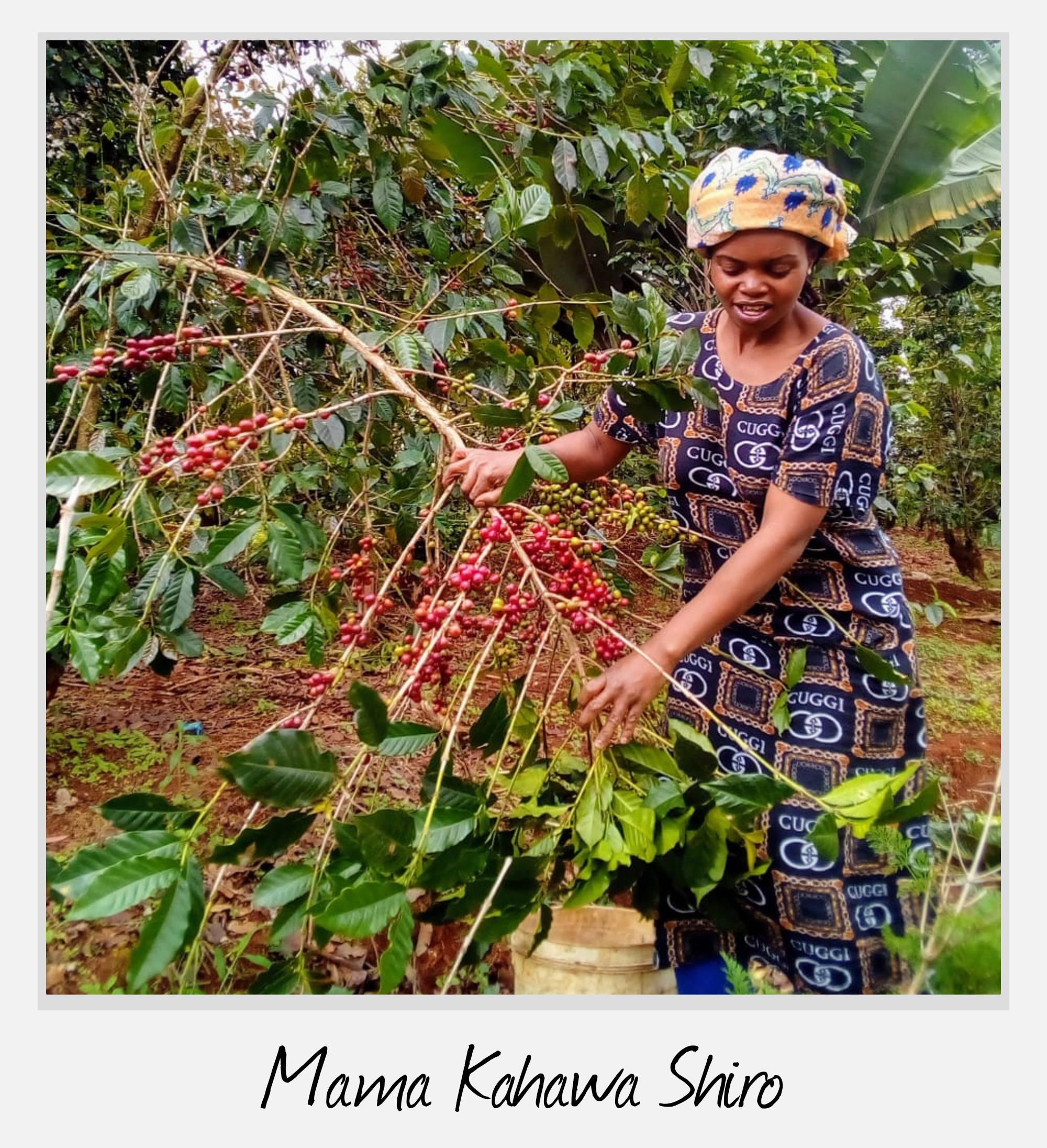 Kaffeepflueckerin in Kenia
